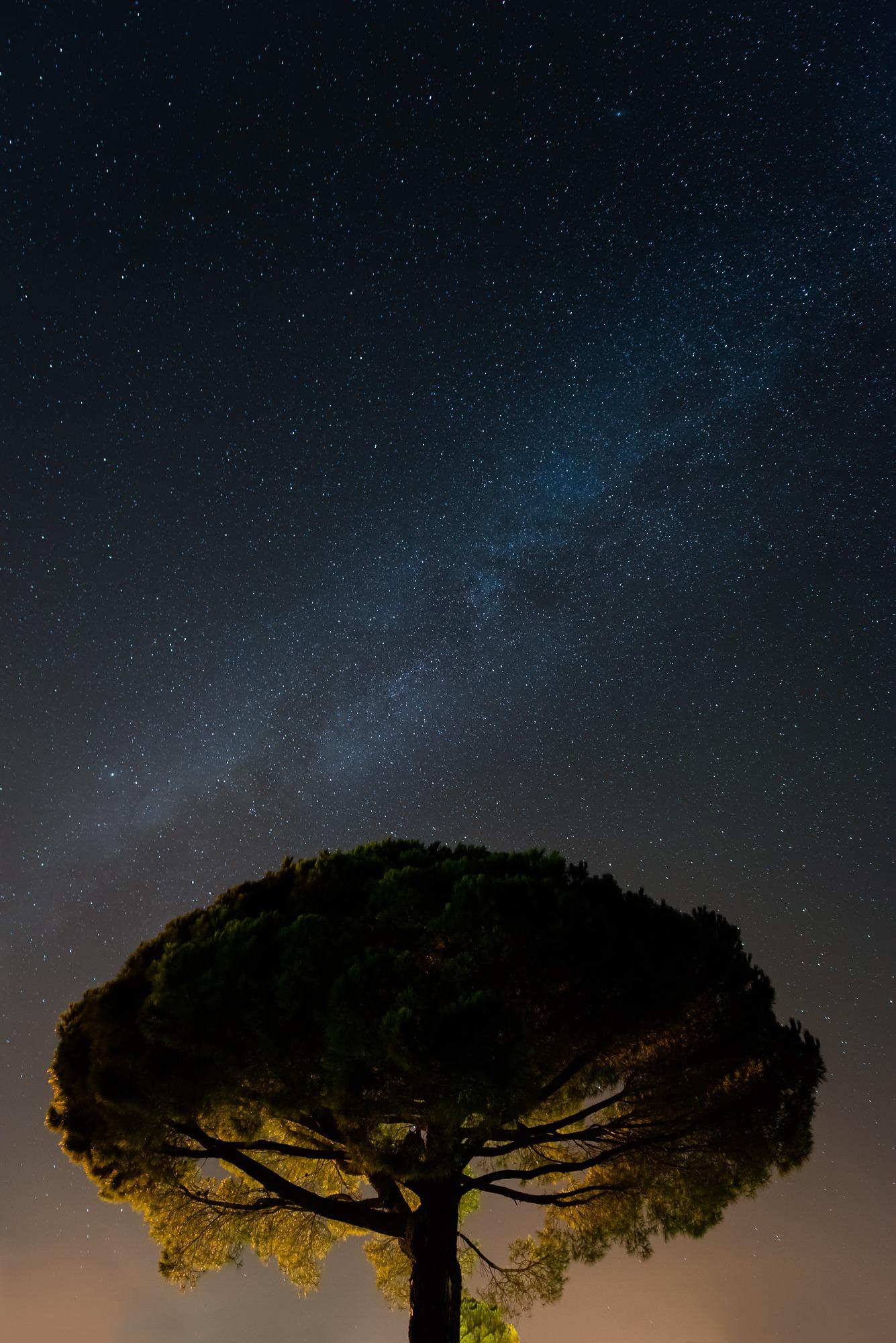 tree corsica